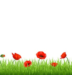 Poppy Field vector image vector image