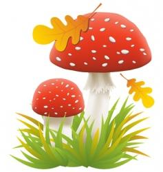 agaric mushrooms vector image