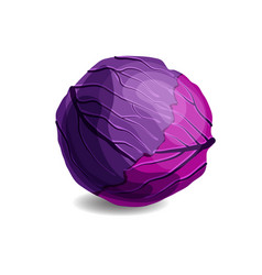 fresh and tasty red cabbage isolated on white vector image