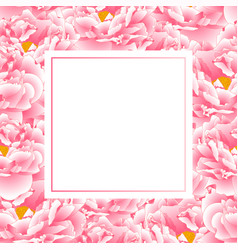 pink peony banner card vector image