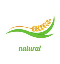 wheat logo template icon design vector image