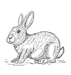 rabbit isolated on white background design vector image