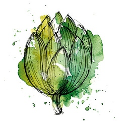 Watercolor of artichoke vector image vector image