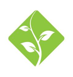 abstract emblem plant logo design vector image