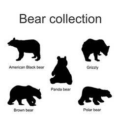 bear species collection silhouette isolated vector image