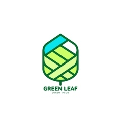 Green leaf growing up logo template vector image