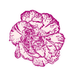 hand drawing realistic flower design to floral vector image