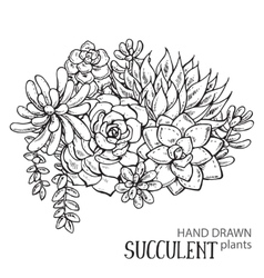 Hand drawn succulent plants vector