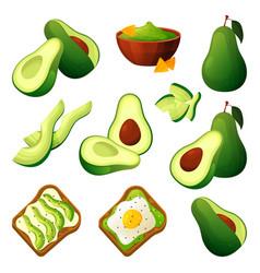 Set avocado food products or ingredients vector