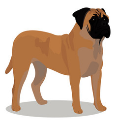 Bullmastiff dog cartoon vector