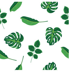 Foliage pattern of green tropical plant palm and vector