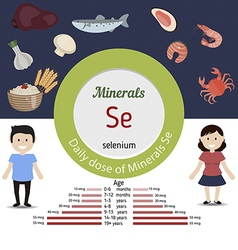 Minerals Se infographic vector image