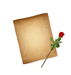 old paper parchment and highly detailed red rose vector image