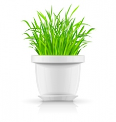 white flowerpot with green grass vector image vector image