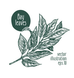 Bay leaves for design menu vector