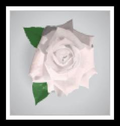 Beautiful white realistic rose vector
