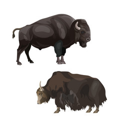 Bison and yak vector