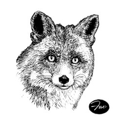 Hand drawn ink fox on white background sketch vector