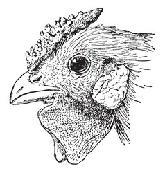 Head of rose comb chicken vintage vector