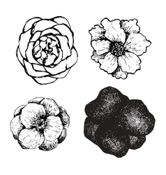 Set of ink pen hand drawn flowers vector image vector image