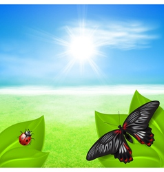 Sunny background with green grass and insects vector