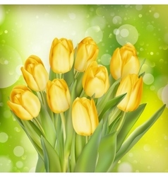 Yellow colored tulips EPS 10 vector image