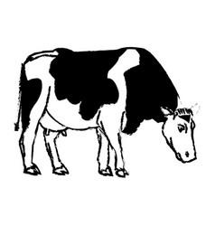 Holstein cow standing farm bovine image vector