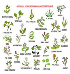 Best herbal remedies for hemorrhoids vector
