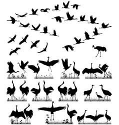 cranes in flight vector image