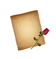 old grungy paper and red elegant rose isolated vector image