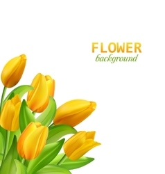 set banners with colorful flower vector image