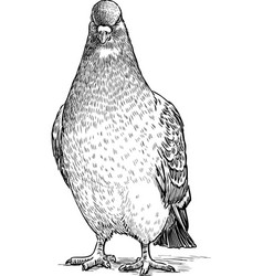 Sketch an angry pigeon vector