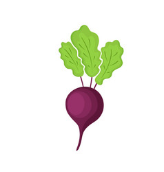 Vegetables of red beetroot isolated vector