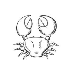 Sketch of big ocean crab vector