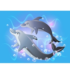 Dolphins swims vector