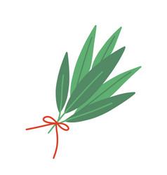 Fresh bay leaf flat aromatic vector