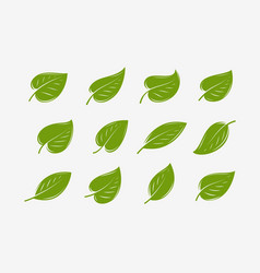 green leaf icon set natural organic logo or vector image