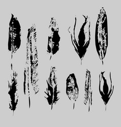 grunge bird feathers set isolated element feather vector image