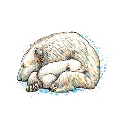 polar bear with cub from a splash watercolor vector image