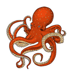 Sea creature octopus engraved hand drawn in old vector