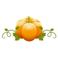 pumpkin vegetable with green vector image vector image