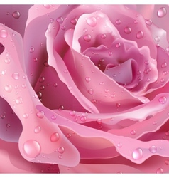Rose background for your design vector image vector image