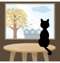 Black cat at window vector image