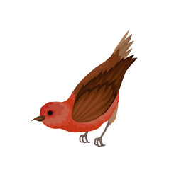 Crossbill with bright red plumage small winter vector