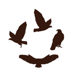 Hawks birds silhouettes with different poses vector