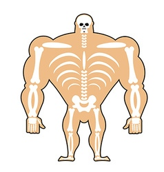 human structure Skeleton men construction of vector image