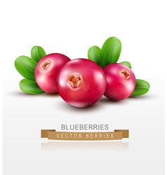 Isolated cranberries with green leaves vector