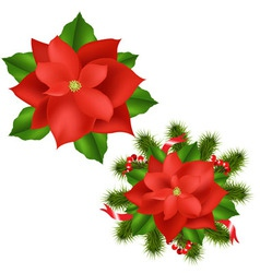Poinsettia vector
