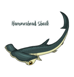 sea creature hammerhead shark engraved hand drawn vector image