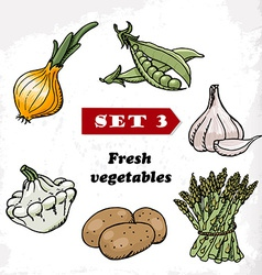 Set 3 Fresh vegetables of onions garlic squash vector